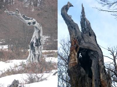 Sculpture des bois