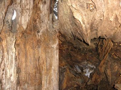 Interieur des bois