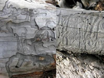 Ecriture du bois