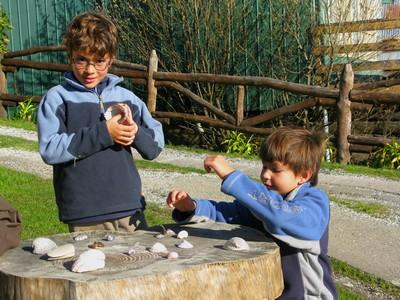Jeu de coquillage a Chiloe